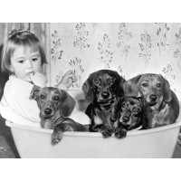Dallas Gilby with dogs