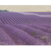 Lavender on Linen 1