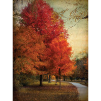 Among the Maples von Jessica Jenny