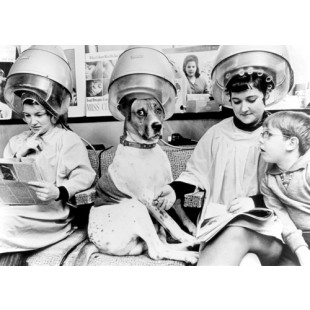 Dog at the Hairdressers