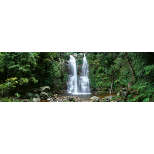 Minnamurra Rainforrest