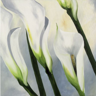 Calla Lilly I
