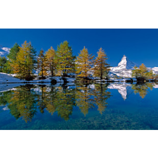 Matterhorn with larches I
